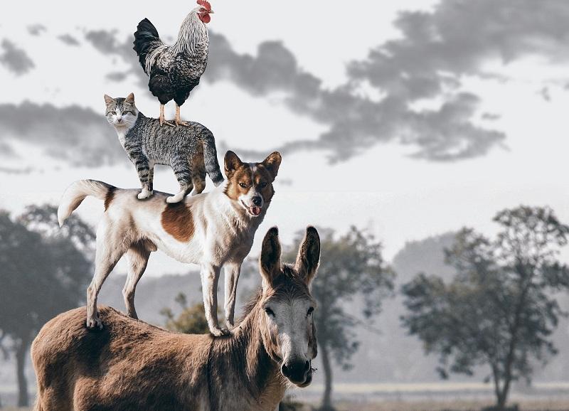 benedizione animali valdicastello