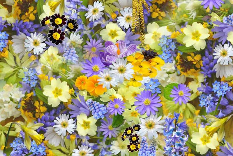 fiori-dautore-pietrasanta-via-barsanti