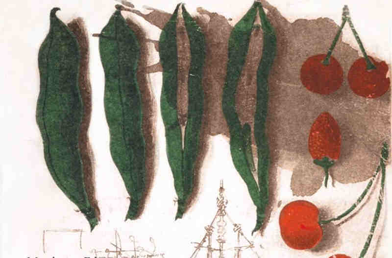 leonardo-non-era-vegetariano