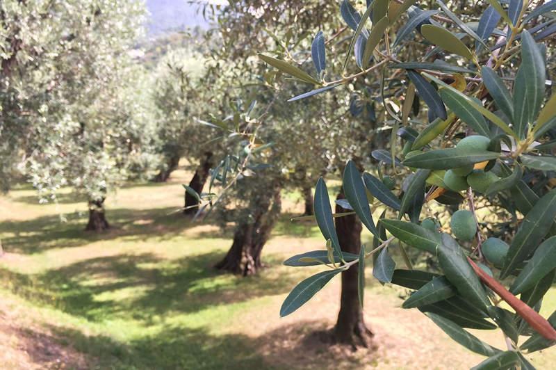 giornata-dell-olivo